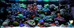 Reef aquarium 800 l in private house