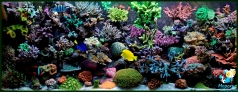 Reef aquarium 600 l in private house