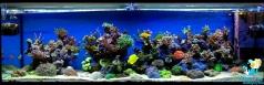 Рифовый аквариум ELOS 200 объемом 800 литров в частном доме