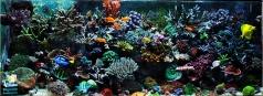 Рифовый аквариум 600 литров в частном доме