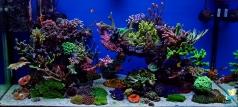 Рифовый аквариум 400 литров в квартире